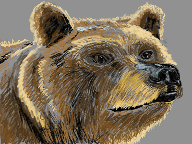 Bear drawing with gray background